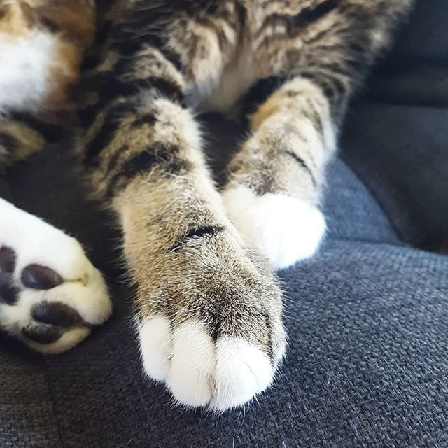 Mars' paws, one of the founders', Fiona and Matt's cats